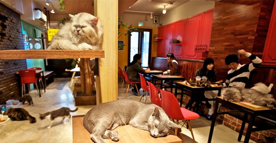 2catcafe_2